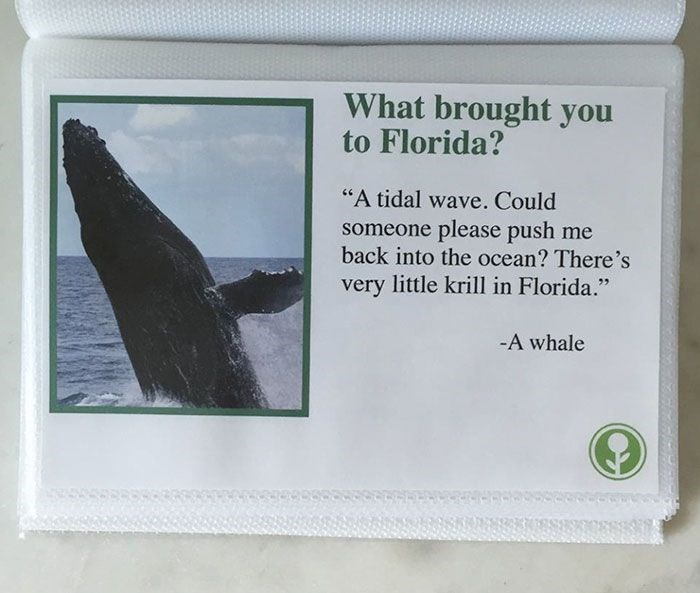 """Marine mammal - What brought you to Florida? """"A tidal wave. Could someone please push me back into the ocean? There's very little krill in Florida."""" -A whale"""