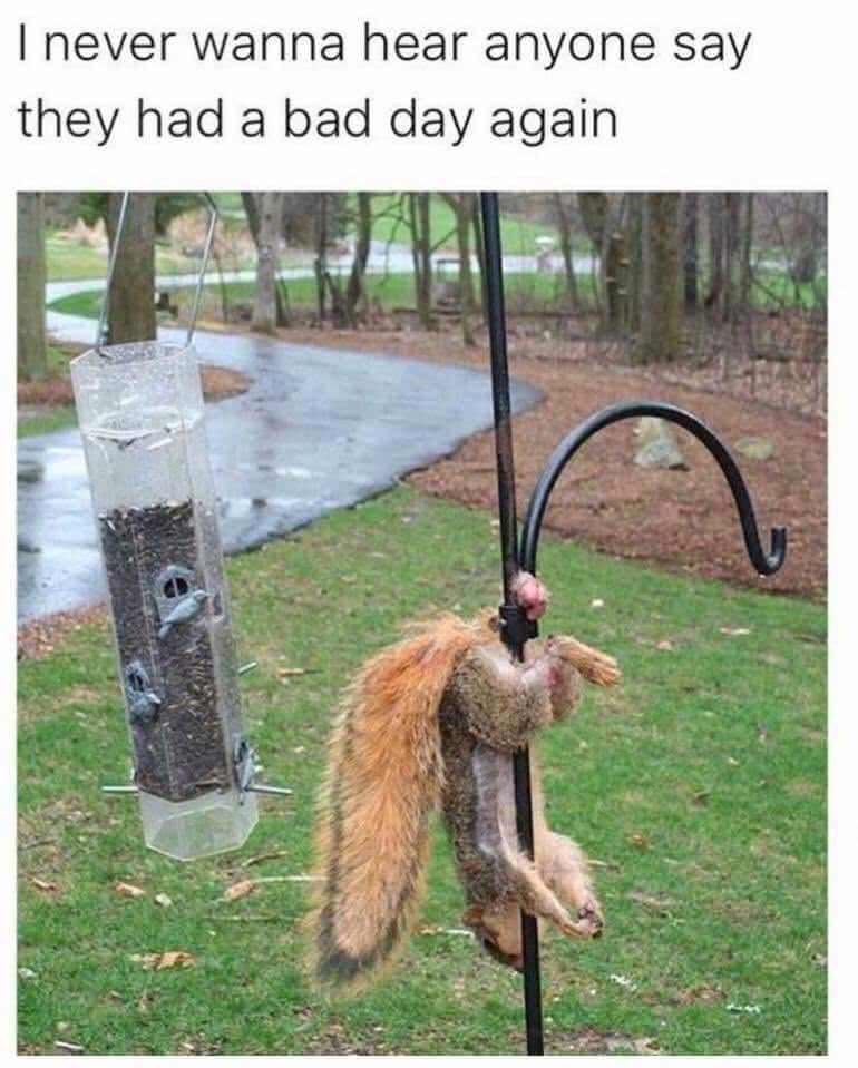 meme - Squirrel - I never wanna hear anyone say they had a bad day again
