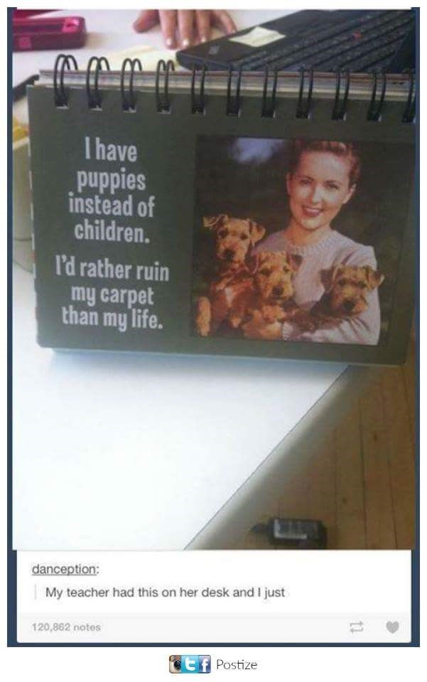 meme - Text - T have puppies instead of children. I'd rather ruin my carpet than my life. danception: My teacher had this on her desk and I just 120,862 notes tf Postize