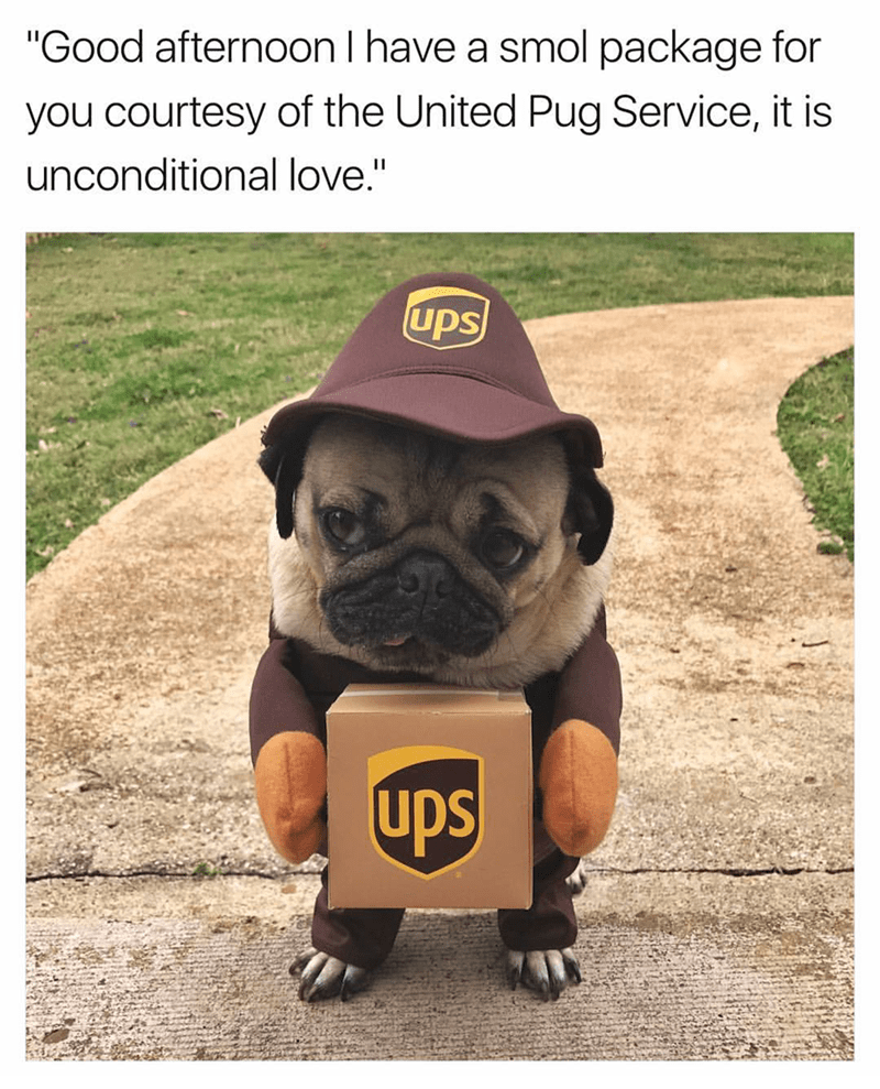 meme- pug dressed in a UPS uniform
