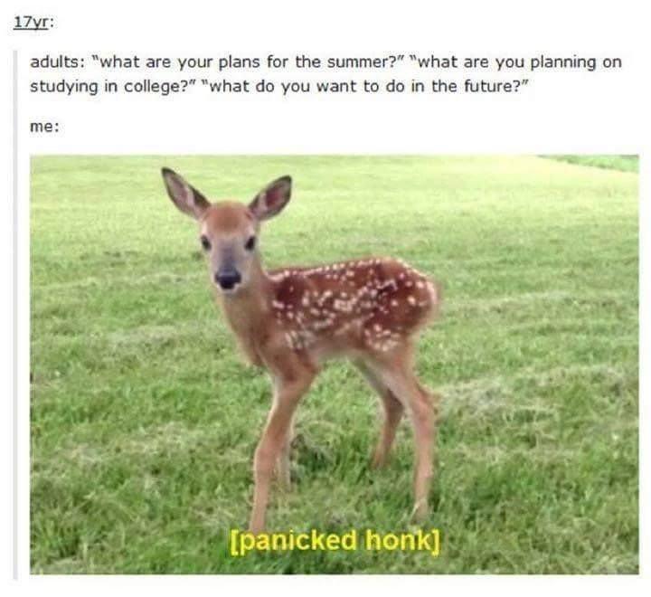 meme- cute baby deer