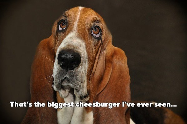 Mammal - That's the biggest cheesburger I've ever seen...