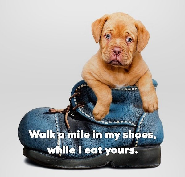 Dog - Walk a mile in my shoes, while I eat yours.