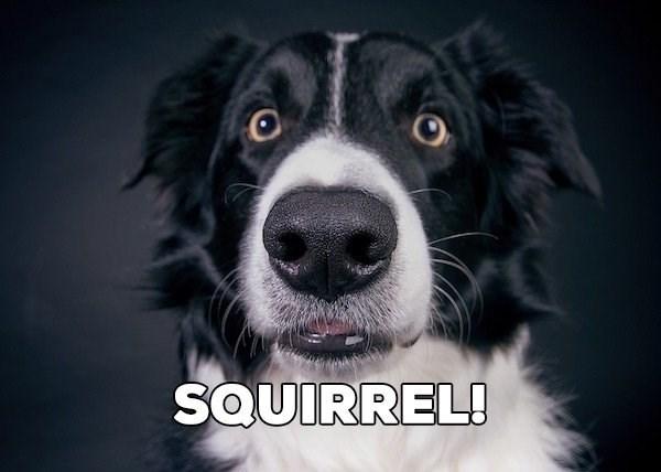 Dog breed - SOUIRREL!