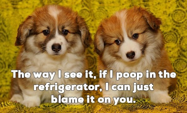 Dog - The way I see it, if I poop in the refrigerator, I can just blame it on you.
