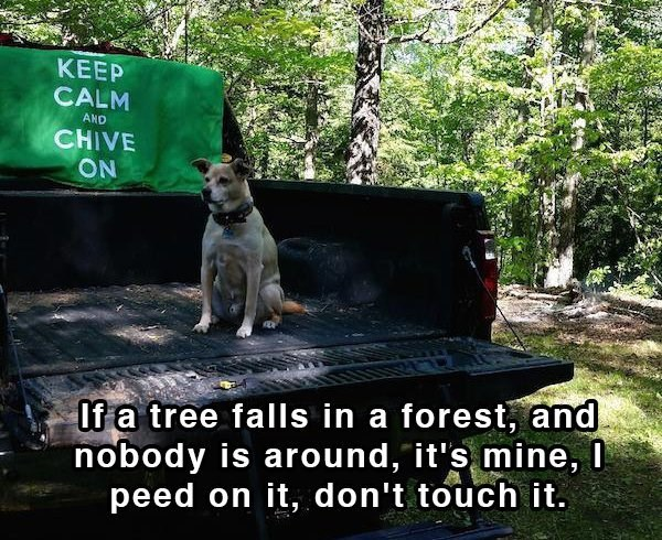 Nature - KEEP CALM AND CHIVE ON If a tree falls in a forest, and nobody is around, it's mine, I peed on it, don't touch it.