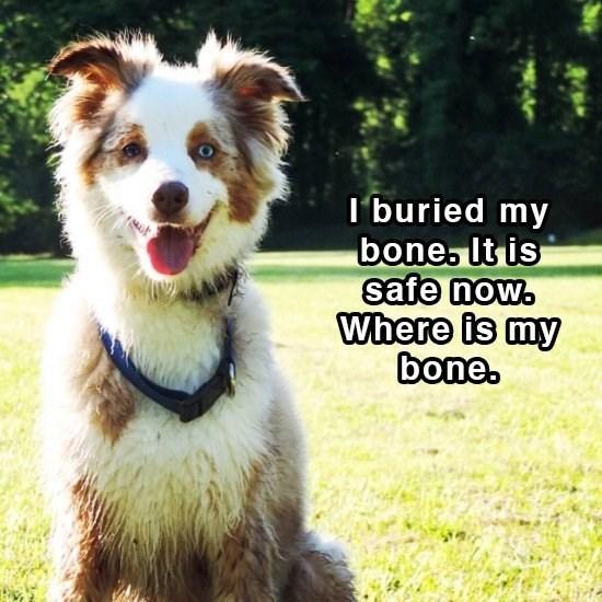 Dog breed - I buried my bone. It is safe now. Where is my bone.