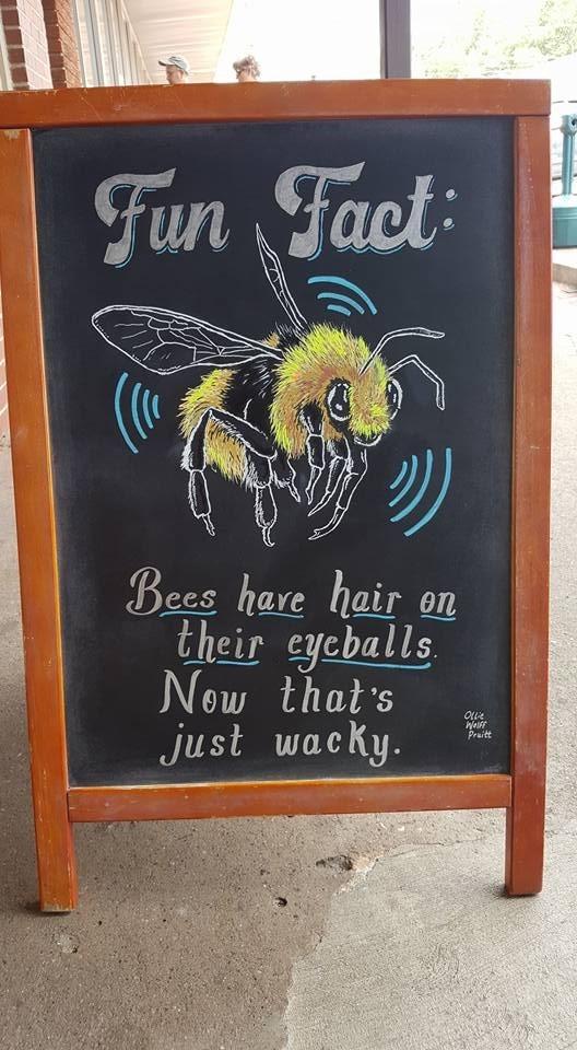 Honeybee - Fun Fact Bees hare hair on their cycballs Now that's just wacky. OLue Weff Praitt