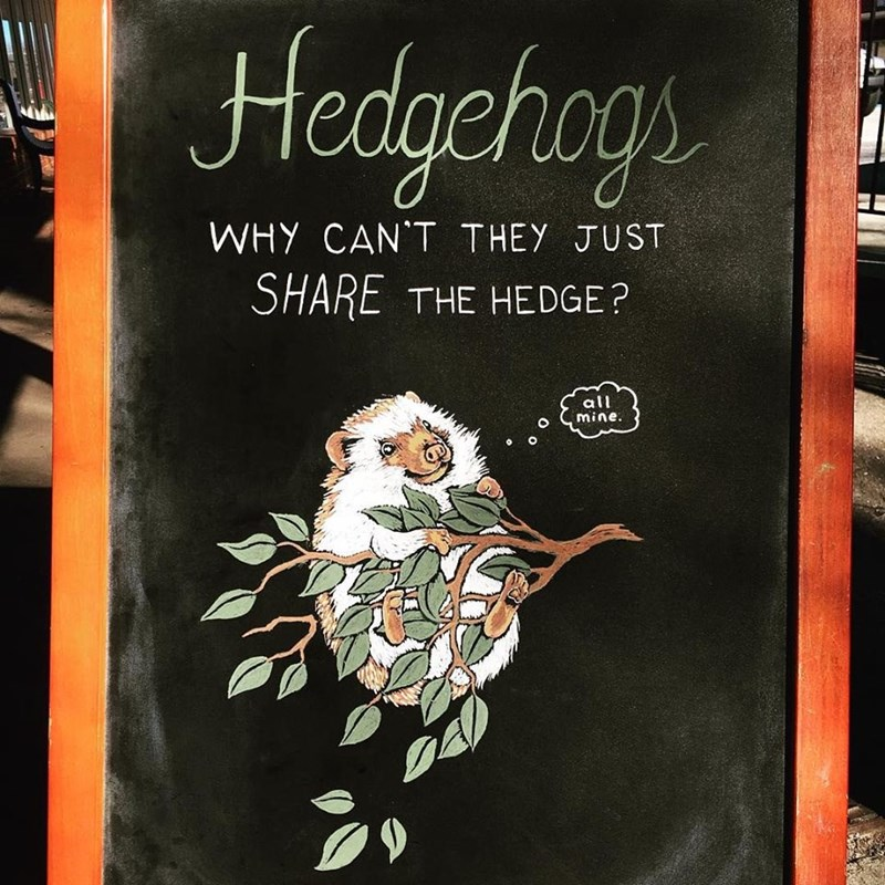 Text - Hedgehogs WHY CAN'T THEY JUST SHARE THE HEDGE? all mine.