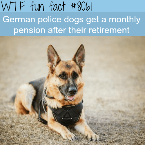wtf facts - Dog - WTF fun fact #806l German police dogs get a monthly pension after their retirement