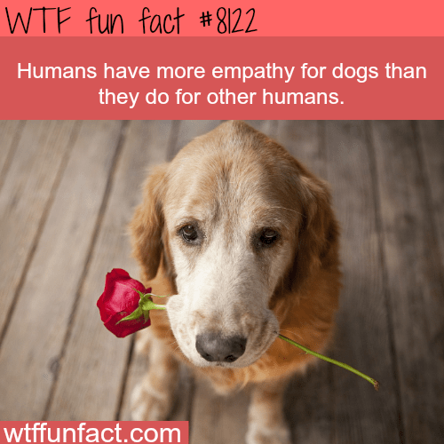 wtf facts - Dog - WTF fun fact #8122 Humans have more empathy for dogs than they do for other humans. wtffunfact.com