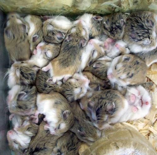 animal piles - Fur