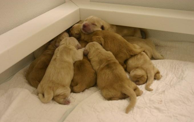 animal piles - Dog