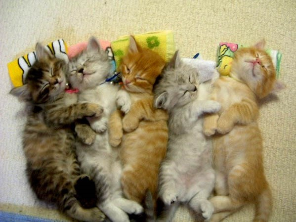 animal piles - Cat