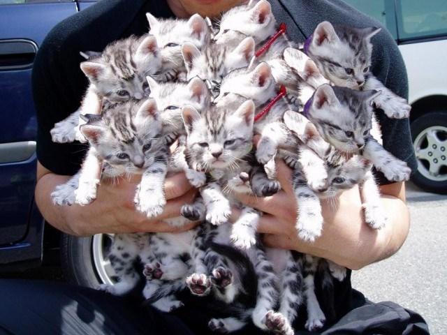 animal piles - Felidae