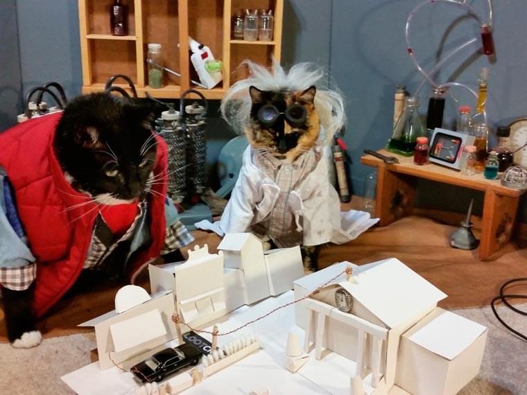 cat cosplay - Electronics