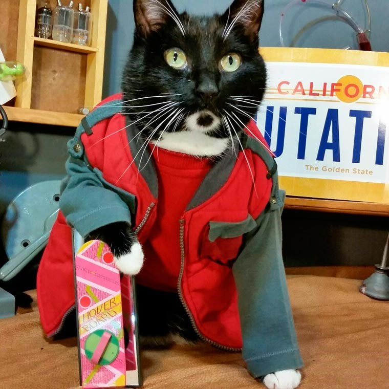 cat cosplay - Cat - CALIFOR TAT UTATI The Golden State HOVER BOARD