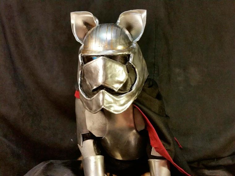 cat cosplay - Bridle