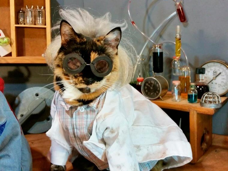 cat cosplay - Cat - 88