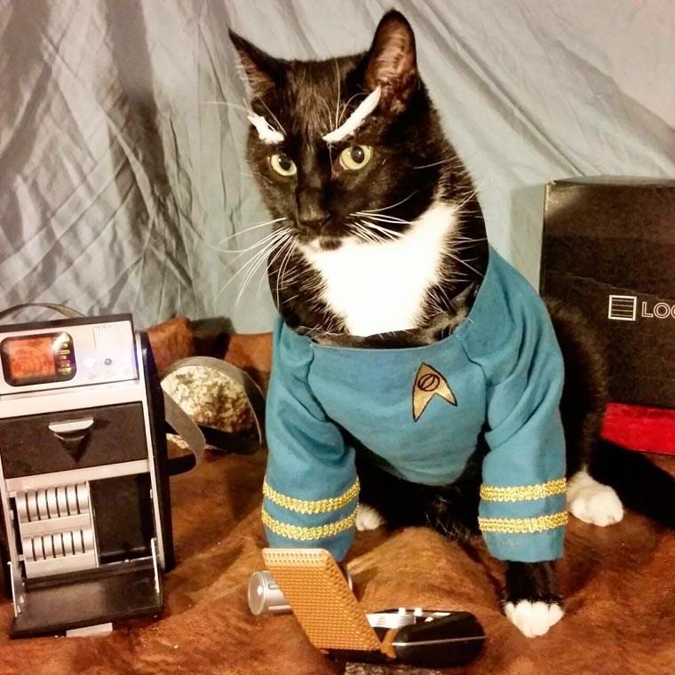 cat cosplay - Cat - LOe