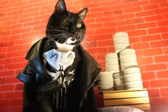 cat cosplay - Cat