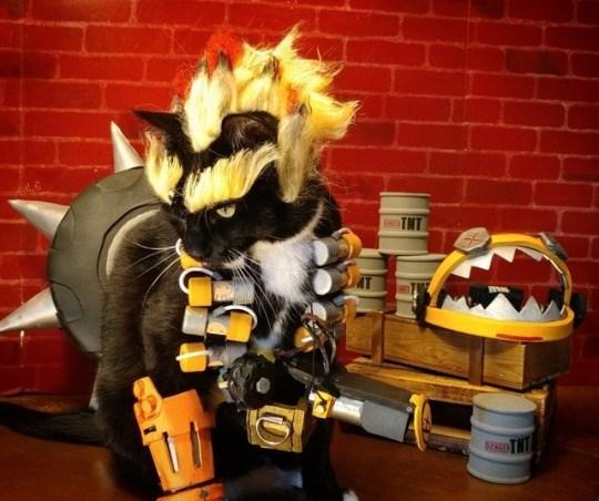 cat cosplay - Toy - TNT BENGE