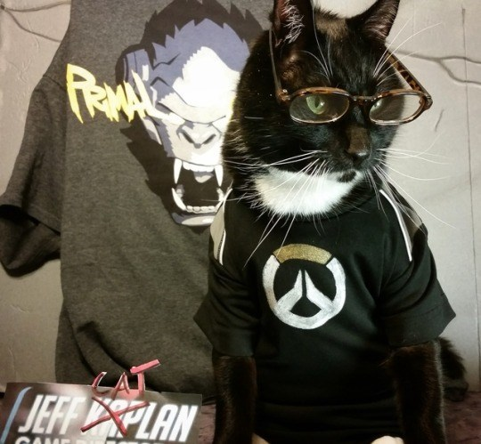 cat cosplay - Cat - JEFFRPLAN