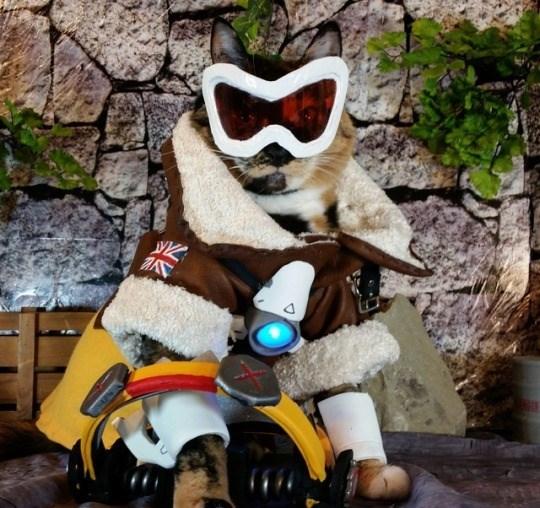 cat cosplay - Vehicle