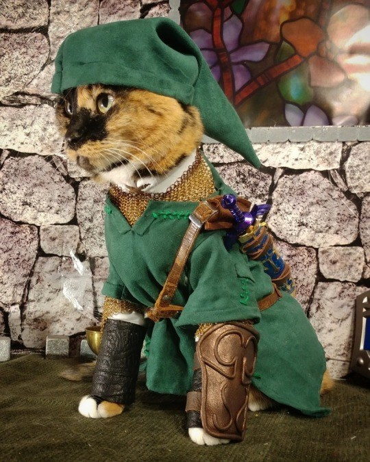 cat cosplay - Costume