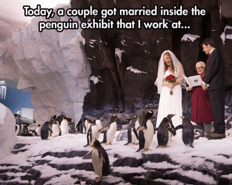 meme - Flightless bird - Today, a couple got married inside the penguin exhibit that I work at...