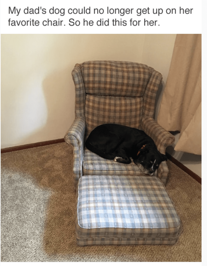 meme - Product - My dad's dog could no longer get up on her favorite chair. So he did this for her.