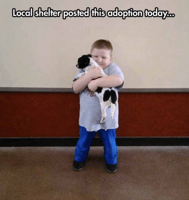 meme - Arm - Local shelter posted this adopfion foday.o