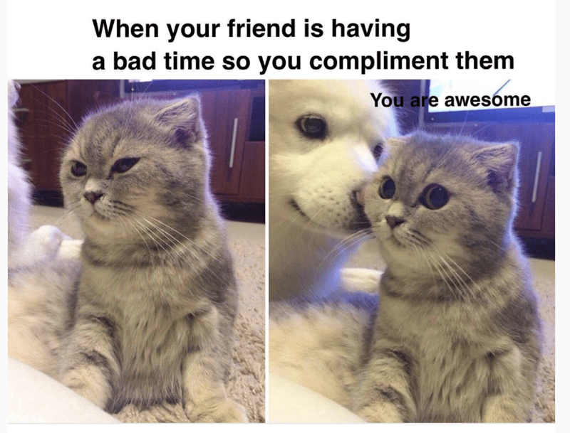 meme - Cat - When your friend is having a bad time so you compliment them You are awesóme