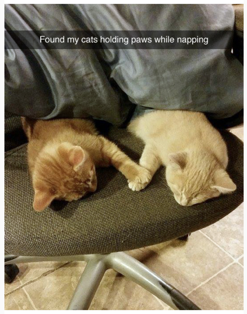 meme - Cat - Found my cats holding paws while napping