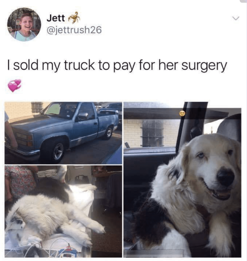 meme - Canidae - Jett @jettrush26 Isold my truck to pay for her surgery
