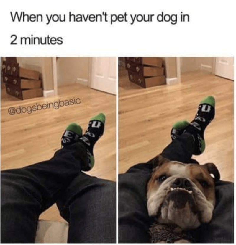 meme - Human - When you haven't pet your dog in 2 minutes @dogsbeingbasic