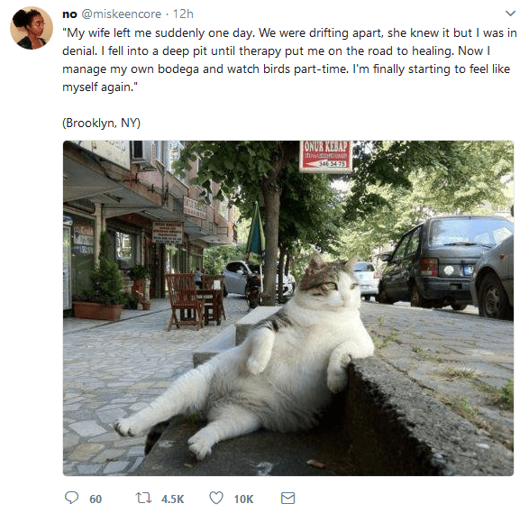 Funny meme about cat phot that is supposed to look like a Humans of New York post.