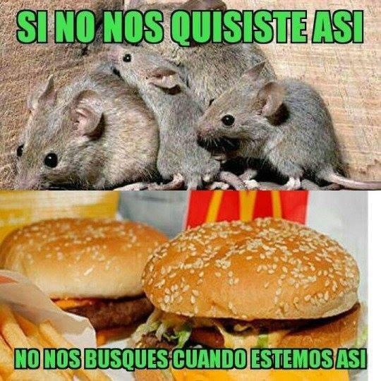Cheezburger Image 9095638016