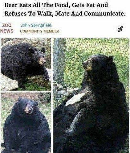 Funny meme about bear wanting to hibernate.