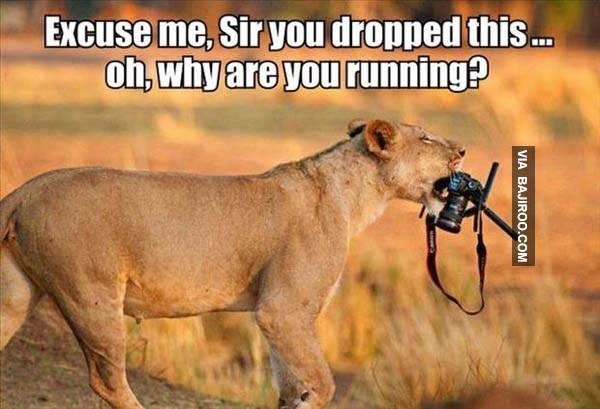 lioness meme of returning the photographer his camera with the teeth