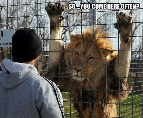 lion meme about picking up strangers