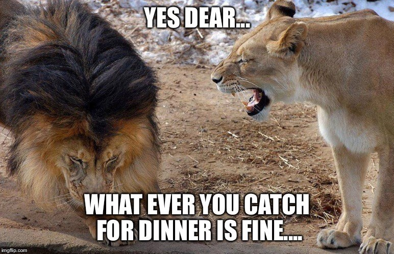 lion meme about just agreeing with her about dinner plans