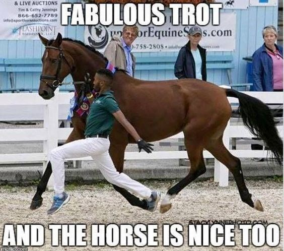 Horse - & LIVE AUCTIONS Tim & Cathy Jennings 866-652-7789 infeosporthsesekuctions.com FABULOUS TROT TLASHIPOINT uorEquineSs.com 758-2808 AND THE HORSE IS NICE TOO mafip.com