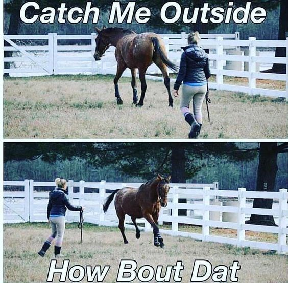 Horse - Catch Me Outside EE How Bout Dat