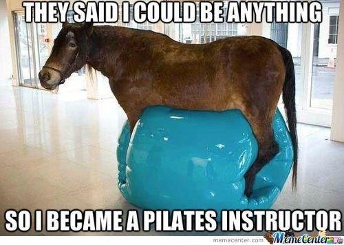 Horse - THEY SAIDICOULD BEANYTHING SOIBECAME A PILATES INSTRUCTOR ManeCentere memecenter.com