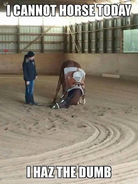 Floor - ICANNOT HORSE TODAY IHAZTHE DUMB