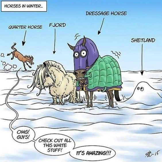 Cartoon - HORSES IN WINTER DRESSAGE HORSE FJORD QUARTER HORSE SHETLAND O. OMG! GUYS! CHECK OUT ALL THIS WHITE STUFF! IT'S AMAZING!!!