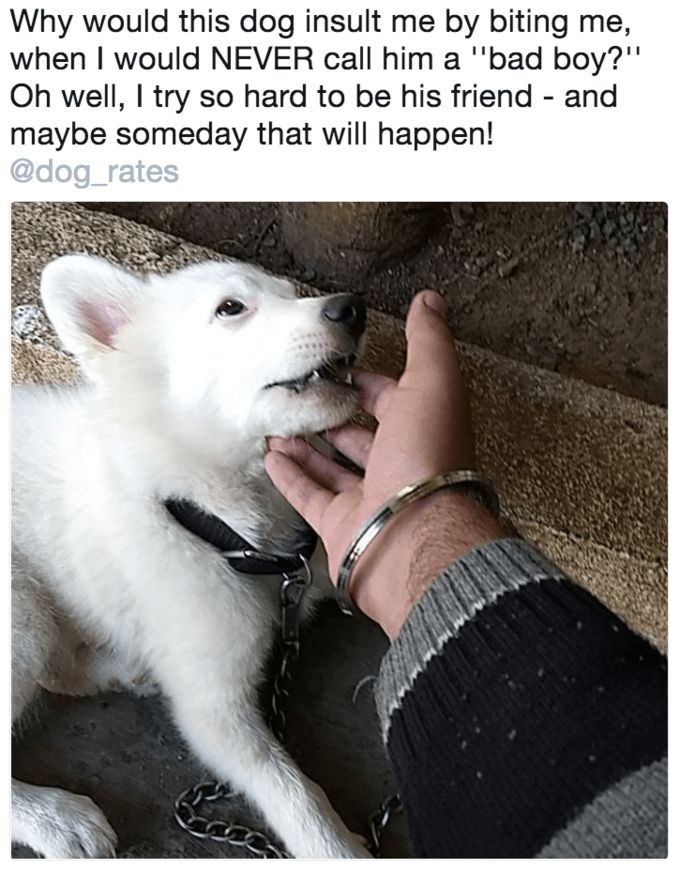 Trump meme about trying to be a cute dog's friend but insulting it instead