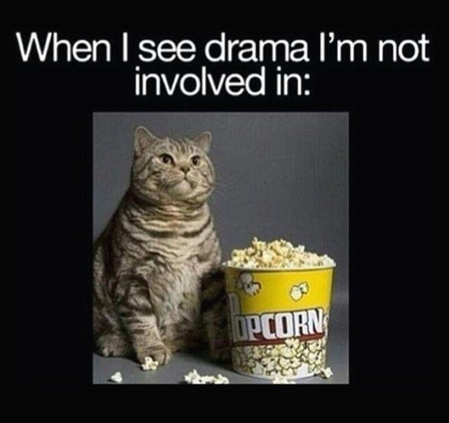 Cat - When I see drama I'm not involved in: OPCORN