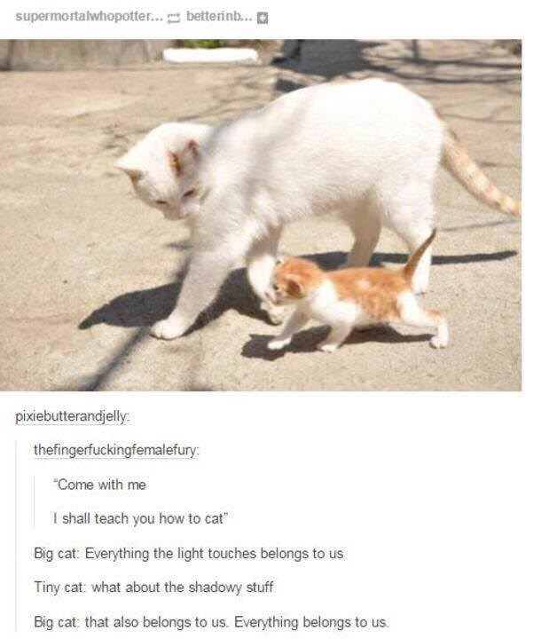 Photo caption - supermortalwhopotter... betterinb.. pixiebutterandjelly thefingerfuckingfemalefury Come with me I shall teach you how to cat Big cat: Everything the light touches belongs to us. Tiny cat: what about the shadowy stuff Big cat: that also belongs to us. Everything belongs to us.